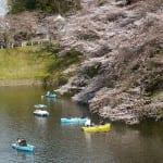 東京に来て2年目、千鳥ヶ淵公園の桜を見に行ってきた(8分咲き)
