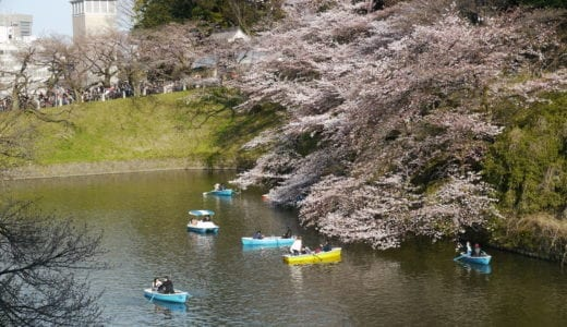 【さくらのおすすめスポット】東京に来て2年目、千鳥ヶ淵公園の桜を見に行ってきた(8分咲き)